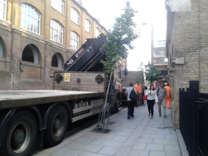 York Way tree hit by lorry