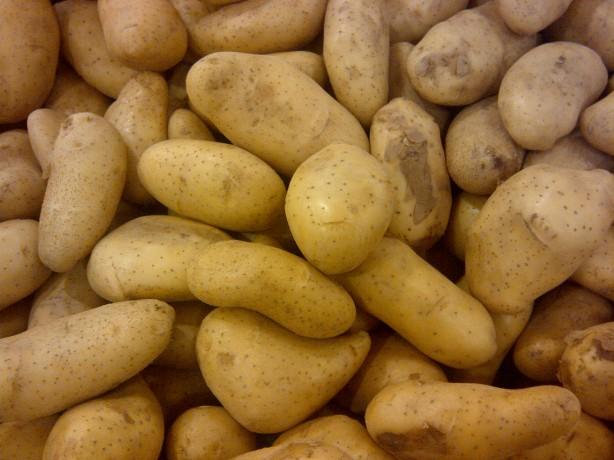 potato storage building plans