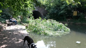 Fallen tree blocks Islington Tunnel on Regent's Canal