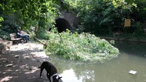 Fallen tree blocks Islington Tunnel on Regent's Canal