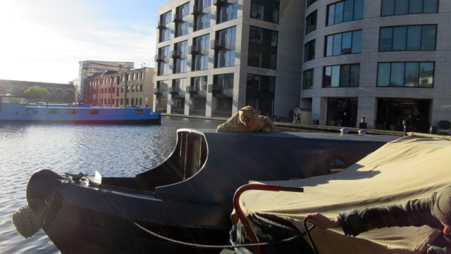 The rarely seen native King's Cross Tiger on the Regent's Canal, north end of Battlebridge Basin