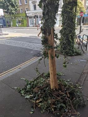 Northdown St – second tree destroyed.