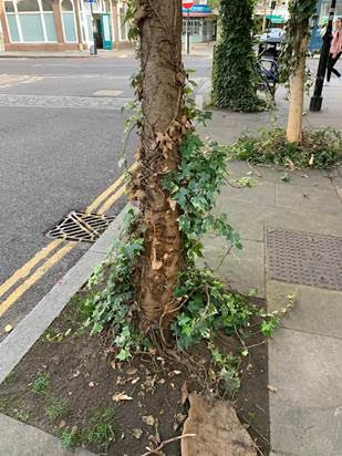 Northdown Street – tree saved so far.